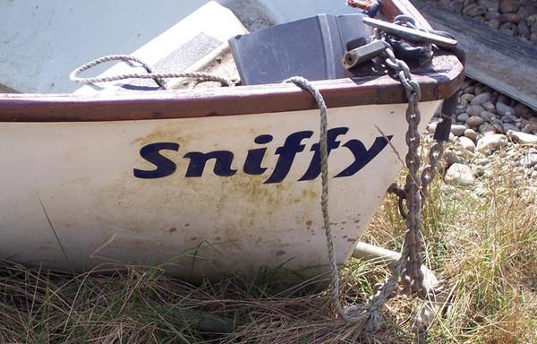Sniffy...... by jennywren