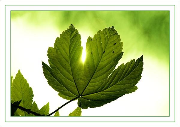 spring green by amos_cmos