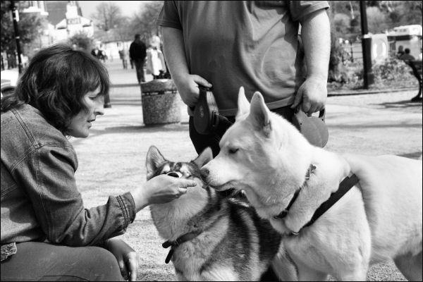 huskies - snack by 1100