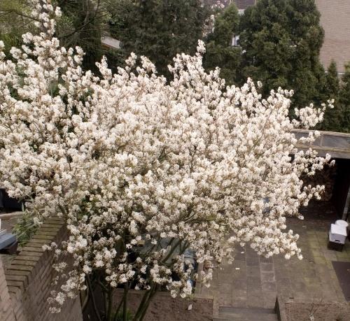 Tree on white by javas