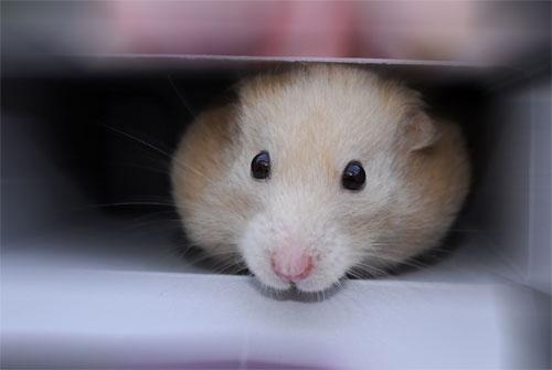 Daisy in a box by Ingleman