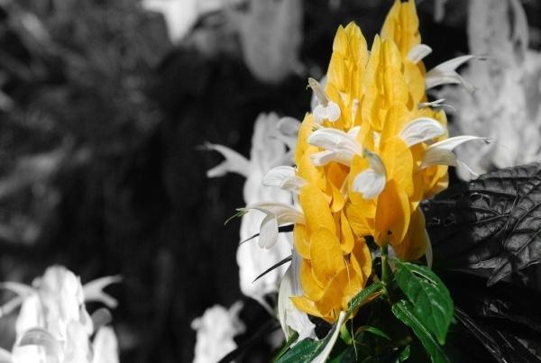 Aberdden Winter Flowers by dubnut71