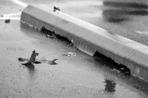 Saddest Leaf by Kanovalov