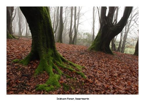 Autumn in Iniscarn by chenderson