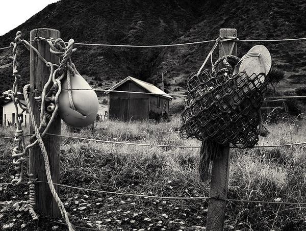 ngawi fence by steve allsopp