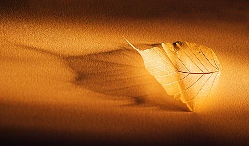 Leaf by Trev_p