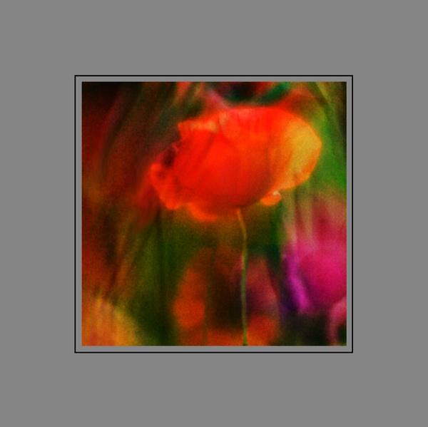 Poppy dream #3 by Phoebecat