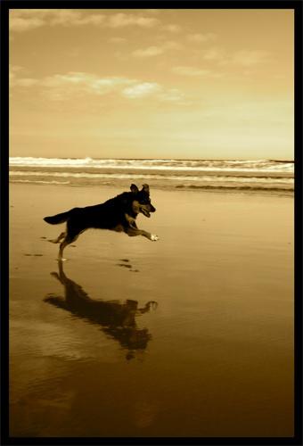 Fetch by alex102