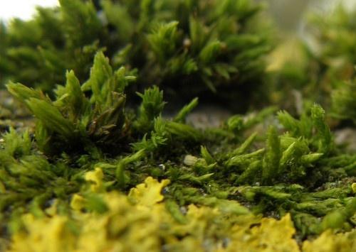 Mini Forest by neilhw