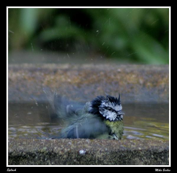 Splash, splash, splash by oldgreyheron