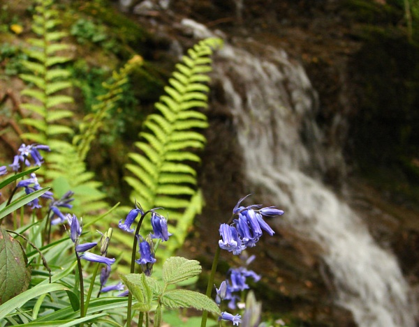 Bluebells in the Fairy Glen by Mr_Grimesdale