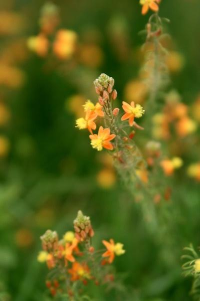Glowing Flower by kezeka