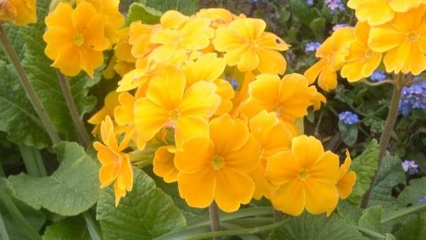 mellow yellow by sean007