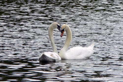 Love is....... by Weasellady