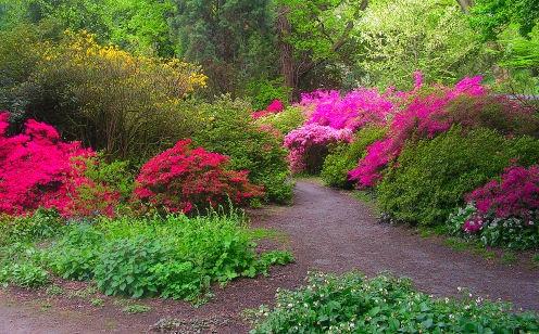 clyne garden (azelea\'s) by photography27
