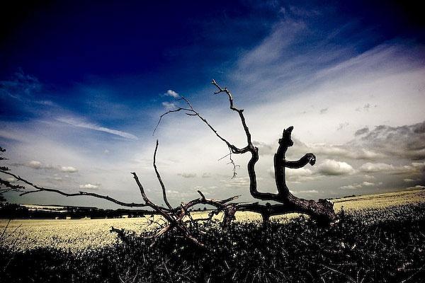Dead Wood by paulBT