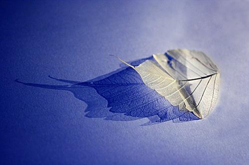 Leaf 2 by Trev_p