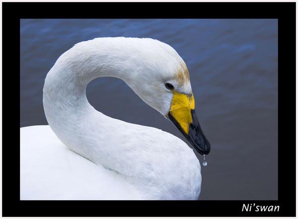 Ni\'swan by JoolsM