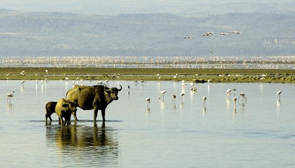 Lake Nakuru Kenya by JohnBick