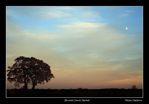 Moon & Trees by waymol
