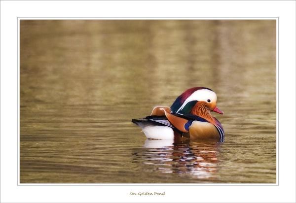 On Golden Pond by essien