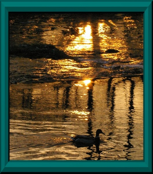 Night Swim by pgurnett