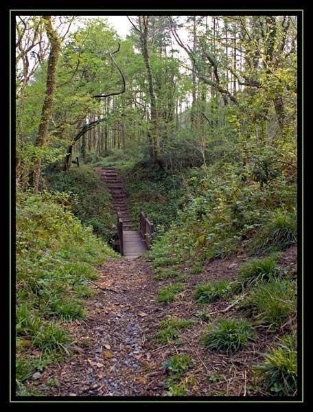Woodland Wonderland.... by AnnS