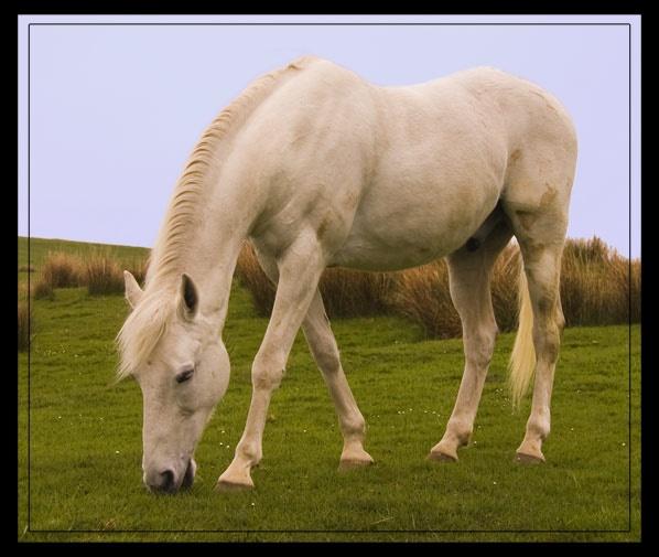 Wild Stallion by inferlogic
