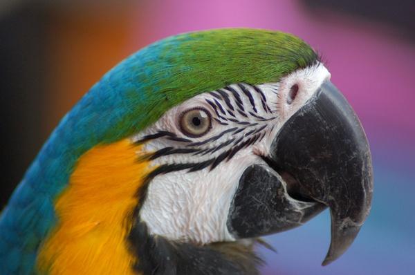 macaw by trustf1