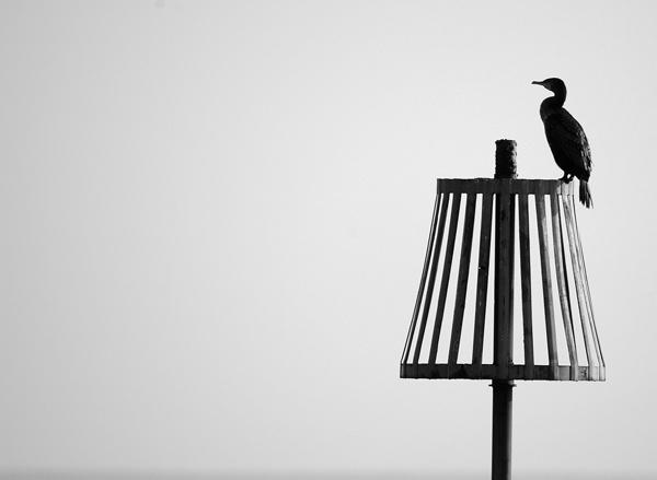Bird by jage