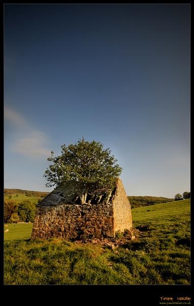 tree house by paulstefan