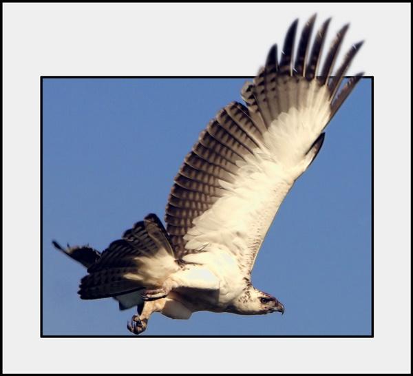Wings by DavidA