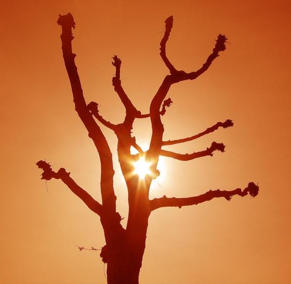 Sunshine by telfordtrio