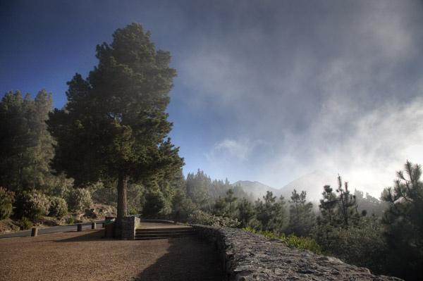 El Teide Tree by MarcPK