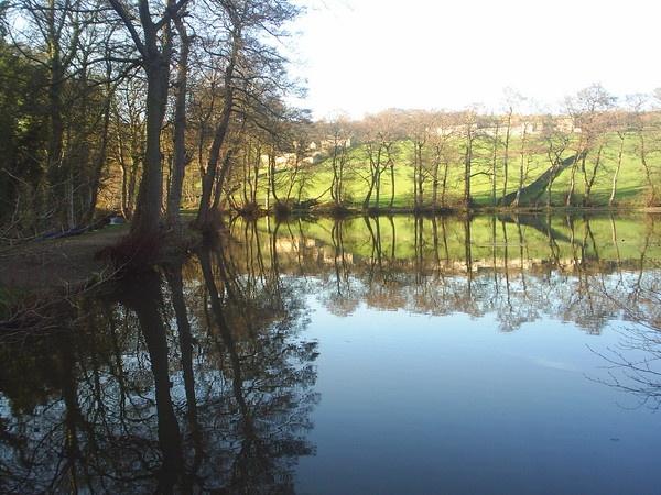 Reflections by riffusraffus