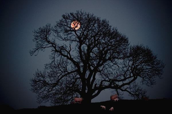 Moonlight - beltane by dale789