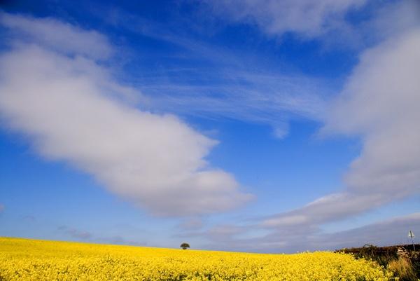 Yellow & Blue by naifud