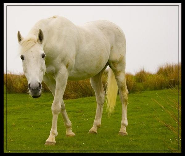white horse by inferlogic