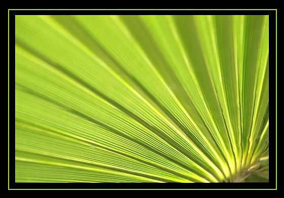 Green by RSaraiva