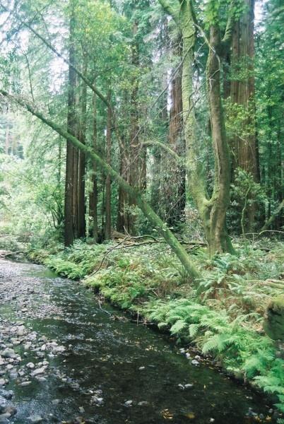 Muir Woods # 44 by TimothyDMorton