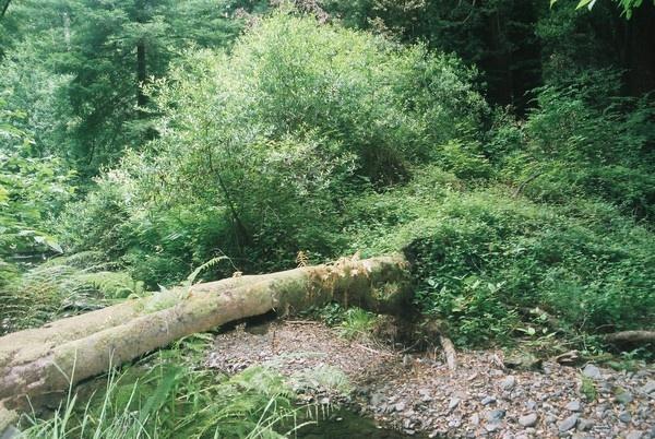 Muir Woods # 70 by TimothyDMorton