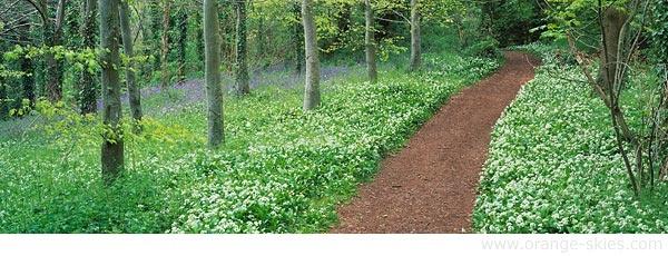 Woodland walk by davidentrican
