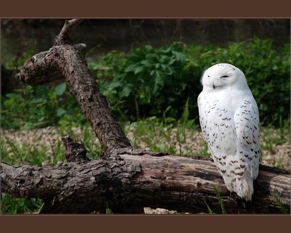 Bark and Owl by grumpalot