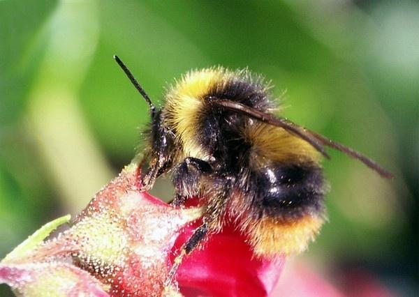 Bee by Lorraine