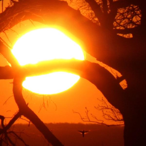 Geneseo Sunset \'Bird\' by bengsays