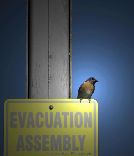 EvacuatioN by Kanovalov