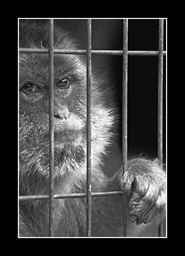 Captive by rickbowden