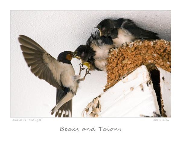 Swallows 2 by sherlob
