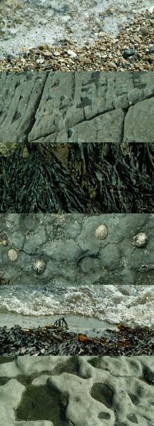 Patterns of Nature II by RachelMB