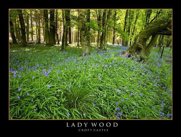 Lady Wood by RobDougall
